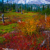 In A Meadow Of Color With Mt Rainier
