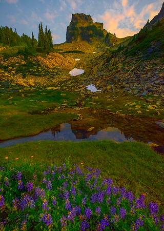 Castle Rock With Reflections And Lupine Pinnacle Peak Area, Mount Rainier National Park, WA