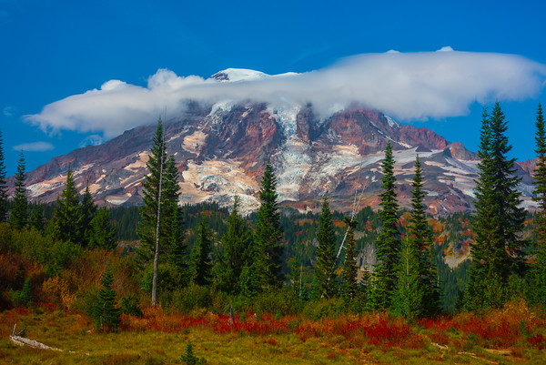 Mt Rainier And Foreground Fall Color