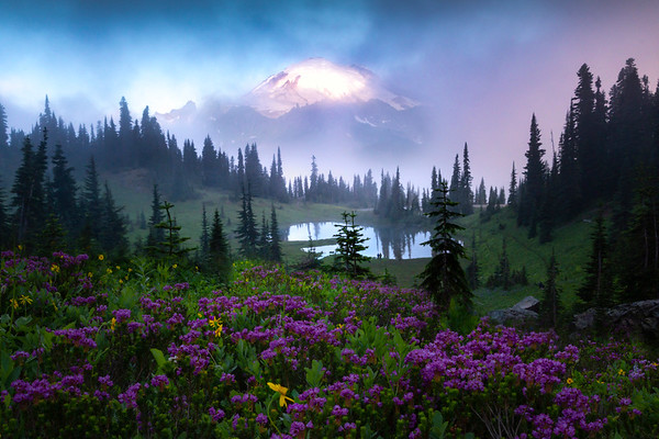 Tipsoo In Fog With Pink Heather - Mount Rainier National Park, WA