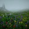 Misty Morning Of Wildflowers - Mount Rainier National Park, WA