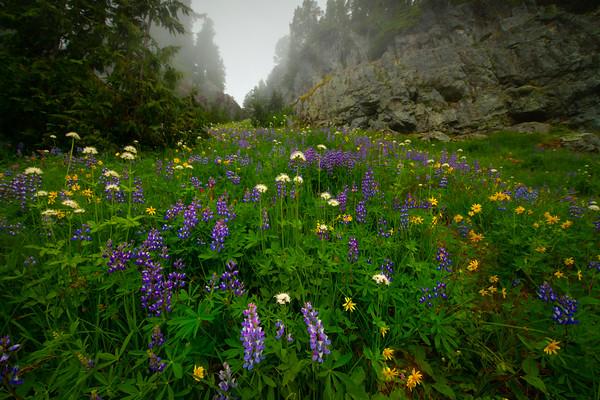Wildflowers Up Through The Canyon - Mount Rainier National Park, WA