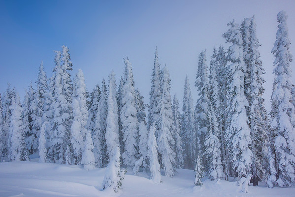 Snow Ghosts Against A Clearing Sky - Paradise Area, Mount Rainier National Park, WA