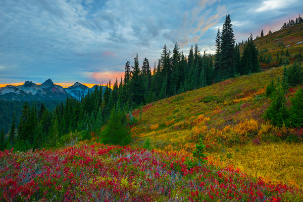 Converging Lines Of Autumn