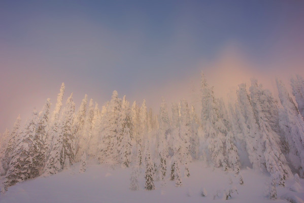 Looking Up At The Snow Wall Near Sunset - Paradise Area, Mount Rainier National Park, WA