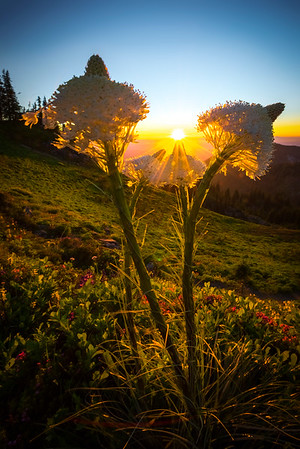 Sunburst Between The Beargrass -Tolmie Peak, Mount Rainier National Park, WA