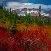 Fall Color Explosion And Mt Rainier