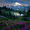 Tipsoo Morning Light And Pink Heather - Mount Rainier National Park, WA