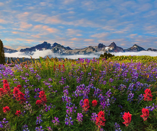 Low Angle Of Tattosh Range And Wildflowers - Paradise Area, Mount Rainier National Park, Washington