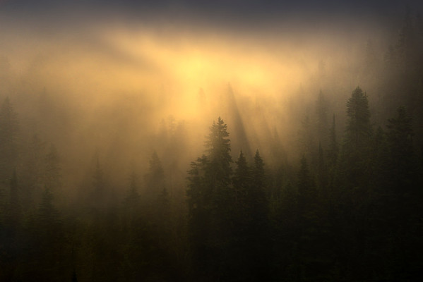 Low Lying Fog With Sun Beaming Down - Mount Rainier National Park, WA