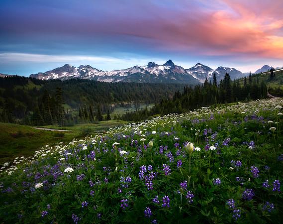 Lupine Meadow Facing Tatoosh Range - Mount Rainier National Park, WA
