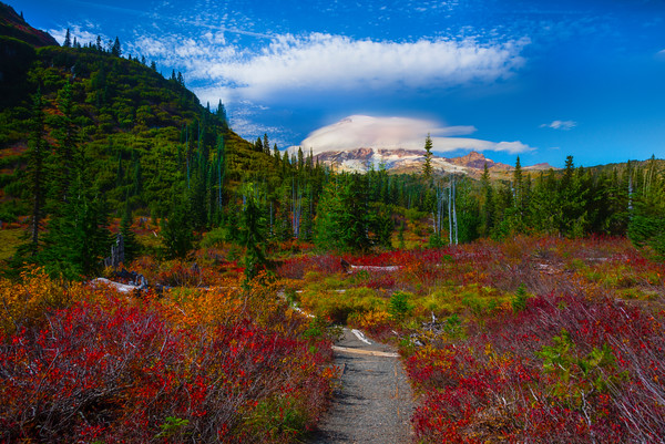 Mt Rainier And Trail Of Color Leading In