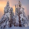 Frozen In Sunset Bliss - Paradise Area, Mount Rainier National Park, WA