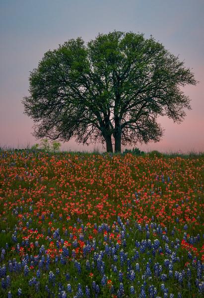 Against A Twilight Pink Sky - Boerne,  Texas
