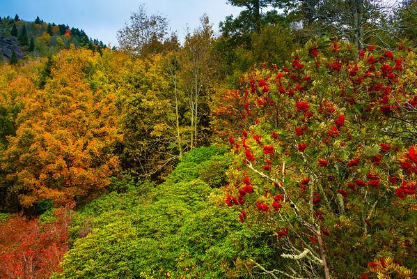 Grandfather Mountain, The Blue Ridge ParkwayGreat Smoky Mountain Region, North Carolina_4