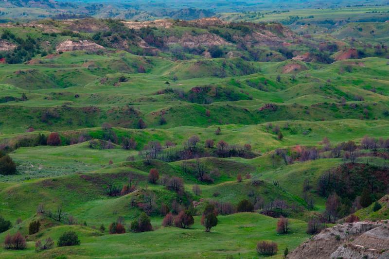 Rolling Grasslands Of The Badlands - Theodore Roosevelt National Park, North Dakota