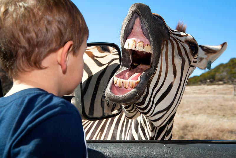 Fossil Rim Wildlife Center and Foothills Safari Camp 1-17-2015