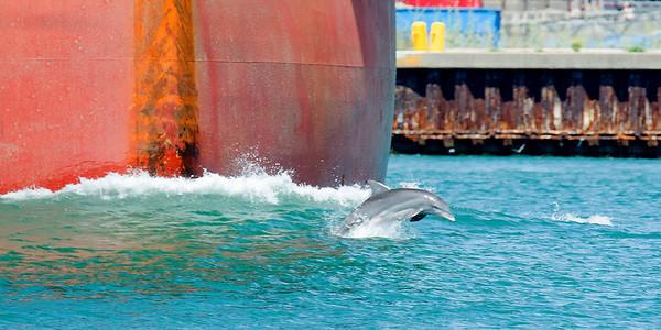 Port Aransas - August 2015