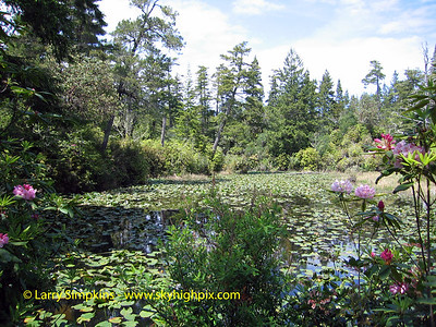Lily pond, North Bend, OR. May 2008 Image# 020