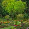 Color Garden And Tree - Beacon Hill Park, Victoria, Vancouver Island, BC, Canada