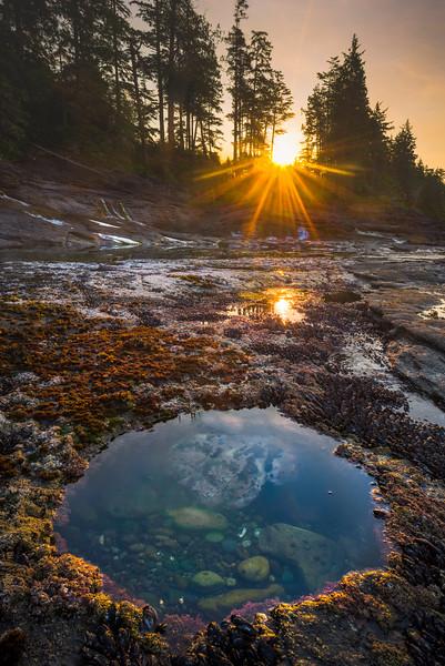 A View Into The Underworld Of Sealife - Parkinson Creek Beach, Juan De Fuca Marine Trail,  Vancouver Island, BC, Canada