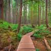 A Walk Through The Avatar Grove - Avatar Grove Ancient Forest, Port Renfrew, Vancouver Island, BC, Canada