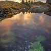 Critters In Tide Pools - Frank Island, Chesterman Beach, Tofino, Vancouver Island, BC, Canada