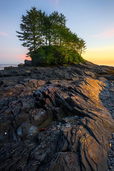 Shells Of Reflective Warm Light_30x20 - Botany Bay, Botanical Beach, Juan De Fuca Trail, Vancouver Island, BC, Canada