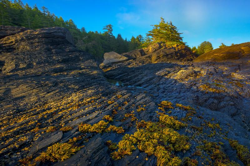 Botany Bay Late Afternoon Light - Botany Bay, Botanical Beach, Juan De Fuca Trail, Vancouver Island, BC, Canada