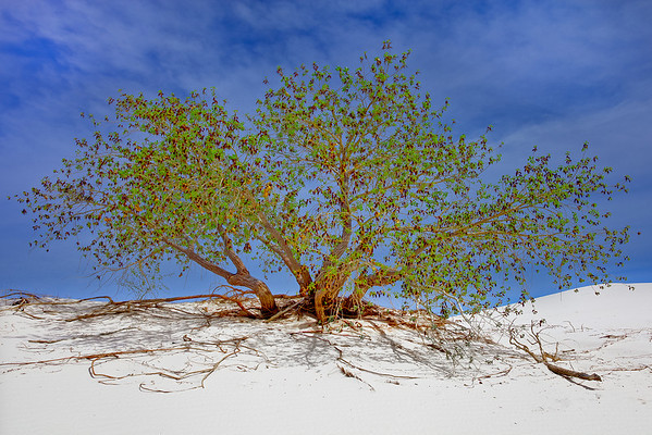 White Sands National Monument 6