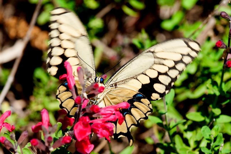Bees, Butterflies, and Moths
