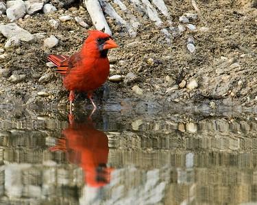 Reynolds Creek Wildlife 8-12-2013