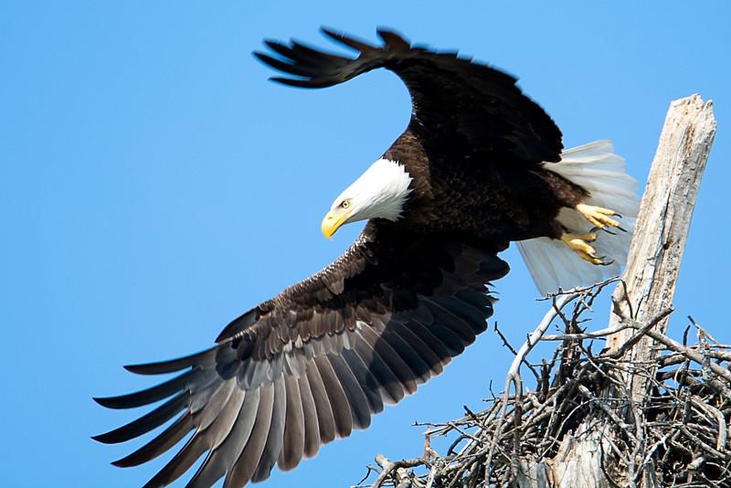 The Eagle Family of  Lake Waco, Texas