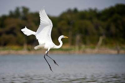 Lake Waco and North Bosque river nature 9-13-2013