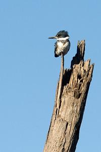 Birds of Reynolds Creek 1-3-2014