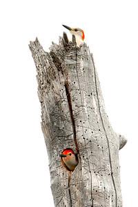 Woodpecker's Lake House