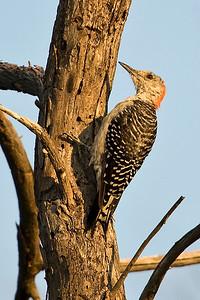 Reynolds Creek Wildlife 8-20-2013