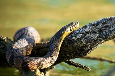 Reynolds Creek Wildlife 8-8-2013