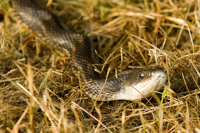 """""""Snake in the Grass"""""""