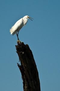 Reynolds Creek and the Waco Wetlands  8-5-2013