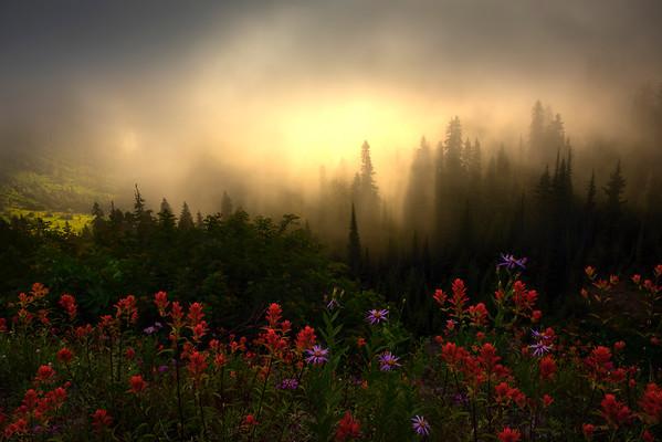 Sun Breaking Through Above The Fog - Mount Rainier National Park, WA