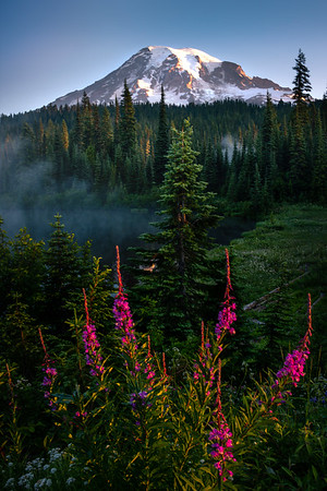 Framed Perfectly For Mt Rainier - Mount Rainier National Park, WA