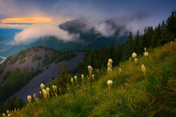Beargrass Sunset On Bandera Mountain - Bandera Mountain Trail, Alpine Lakes Wilderness, WA