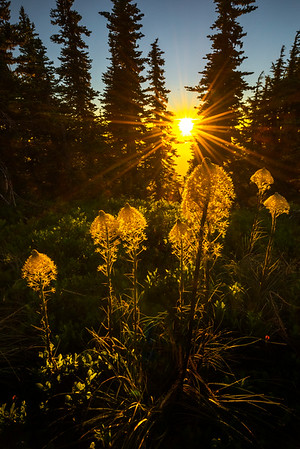 Beargrass Iluminated -Tolmie Peak, Mount Rainier National Park, WA