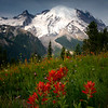 Indian Paintbrush From Silver Forest Trail - Mount Rainier National Park, WA