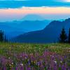 Lupine Twilight Looking Towards Mt St Helens - Snow Grass Flats , Goat Rocks Wilderness, Gifford Pinchot SP_WA_