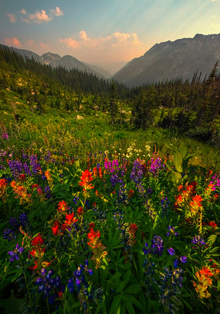 Wildflowers Leading Into The Valley - Idaho Pass, Kootenay Rockies, BC, Canada
