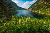 Western Anemone And Kokanee Lake Kokanee Lake, Kootenay Rockies, BC, Canada