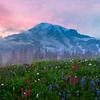 Mt Rainier Pink Sky And Flowers__Mount Rainier National Park_Washington