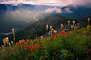 Wildflower Season On Bandera Mountain - Bandera Mountain Trail, Alpine Lakes Wilderness, WA